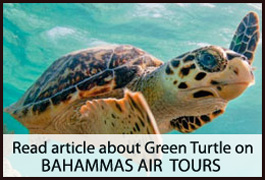 Brendal's - Bahamas Air Tours