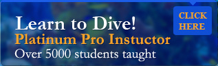 Learn to Dive with Brendal Stevens platinum pro instructor